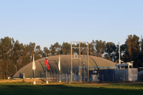 Industria porcina chilena